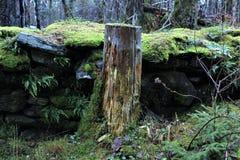 Pilz, Wald, Grün stockfotos