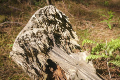 Pilz, Wald, Grün Lizenzfreie Stockfotografie