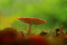 Pilzartige Schönheit stockfotos