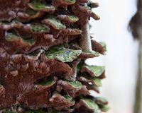 Pilzartiges Wachsen auf einem Baum im kanadischen Wald lizenzfreie stockfotografie