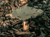 Pilzartiges Wachsen in den Schnitzeln von der Barke eines Baums lizenzfreie stockfotos