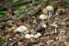 Pilze stockbild