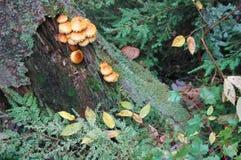 Pilze lizenzfreie stockfotos