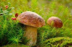 Pilze Lizenzfreies Stockbild
