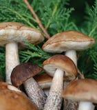 Pilze Lizenzfreie Stockbilder