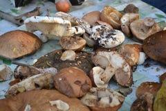 Pilze lizenzfreie stockfotografie