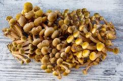 Pilze 'Armillaria mellea' auf dem Tisch Lizenzfreie Stockbilder