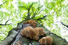 Pilze auf Baum Stockfoto
