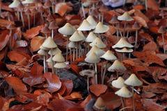 Pilze auf Blättern Stockfotografie