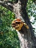 Pilze auf dem Baum Stockfotografie