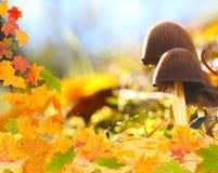 Pilze auf dem Waldboden stockfotografie