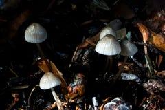 Pilze auf dem Waldboden lizenzfreies stockbild