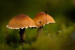 Pilze auf dem Waldboden lizenzfreie stockfotos