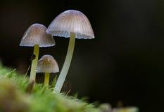 Pilze auf dem Waldboden stockbilder