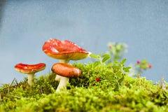 Pilze auf der Streuschicht Lizenzfreies Stockfoto