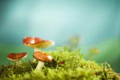 Pilze auf der Streuschicht Stockfoto