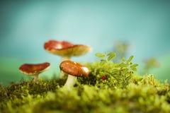 Pilze auf der Streuschicht Lizenzfreie Stockfotografie