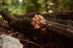 Pilze auf einem Baum Stockfotografie