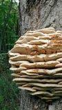 Pilze auf einem Baum Stockbild