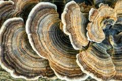 Pilze auf einem Baum-Kabel lizenzfreie stockfotos