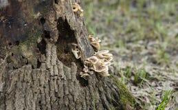 Pilze auf einem Baum-Kabel lizenzfreies stockbild