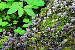 Pilze auf einem moosigen Klotz Stockfotografie