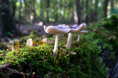 Pilze auf einem Sonne beleuchteten Baum Stockfotos