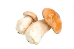 Pilze auf einem weißen Hintergrund Stockfotos