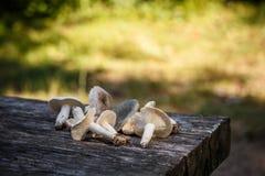 Pilze auf einer hölzernen Tabelle lizenzfreie stockfotos