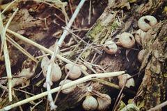 Pilze auf einer Niederlassung Lizenzfreie Stockbilder