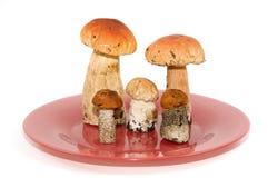 Pilze auf einer Platte Lizenzfreie Stockbilder