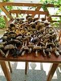 Pilze auf einer Tabelle Stockfotos
