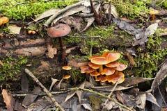 Pilze auf gefallener Belastung Stockfotos