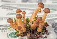Pilze auf Geldhintergrund Lizenzfreie Stockfotografie
