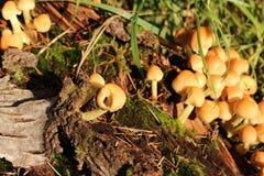 Pilze auf Klotz Stockbilder