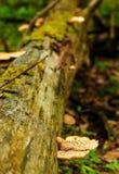 Pilze auf Klotz Lizenzfreies Stockbild