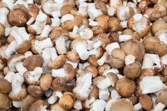 Pilze auf Markt Lizenzfreie Stockbilder