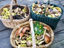 Pilze in den Körben Stockbilder