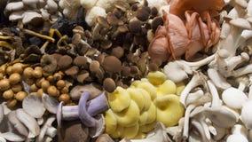 Pilze in den verschiedenen Farben Stockbild