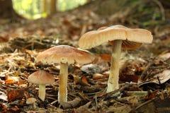Pilze in der Blattsänfte Stockfotografie
