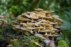Pilze, die auf einem Baumstamm wachsen Stockbilder