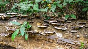 Pilze, die auf einem Klotz wachsen stockbilder