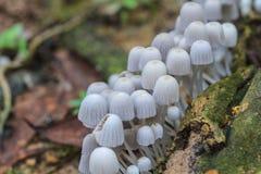 Pilze, die auf einem Livebaum im Wald wachsen Lizenzfreie Stockbilder