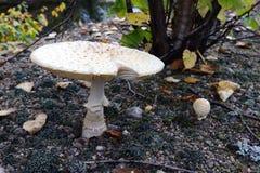 Pilze, die aus den Grund wachsen lizenzfreie stockfotografie
