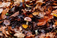 Pilze, die im Waldland wachsen lizenzfreies stockfoto