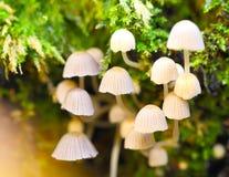 Pilze, die oben vom Boden keimen lizenzfreie stockfotografie