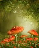 Pilze durch einen Teich Stockbild
