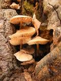 Pilze in einem Baum Stockfoto