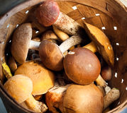 Pilze in einem Eimer Stockfotos