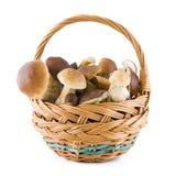 Pilze in einem Korb Stockfotos